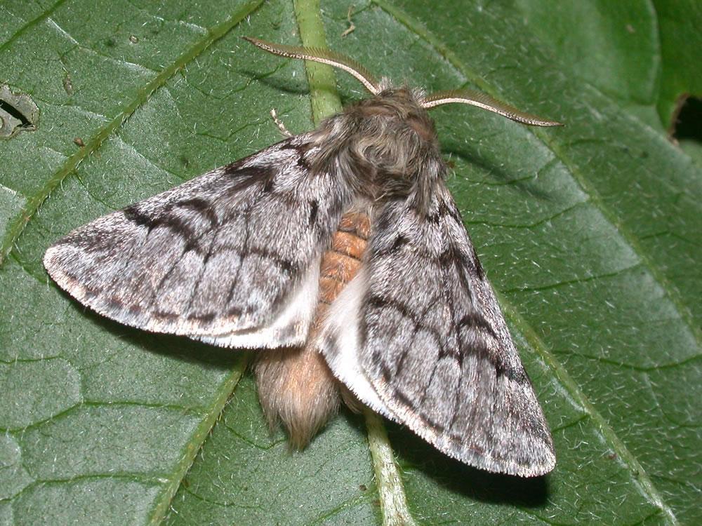 Trappole per farfalle