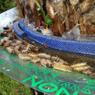 Trappole per larve